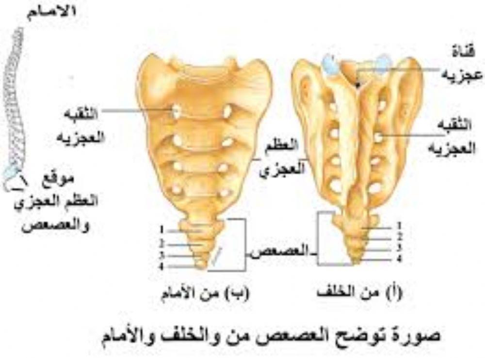 علاج الم العصعص أسفل الظهر بعد الولادة السقوط أو الجلوس المتواصل على الكرسي الطب العربي البديل